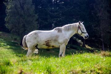 a white horse © Petro Teslenko