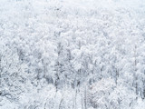 aerial view of snow-covered trees in forest - 249886063