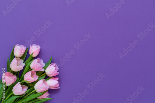 Bouquet of pink tulips on purple background. Top view, copy space - 249926042