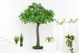 Green plastic maple tree with pot plants in white interior with stairs