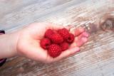 Raspberries in a girl's hand.