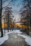 Pathway And Trees In Snowy Winter - 249948021