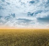 autumn fields - 249964012