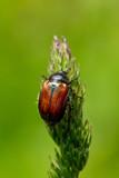 Bugs - 249991298