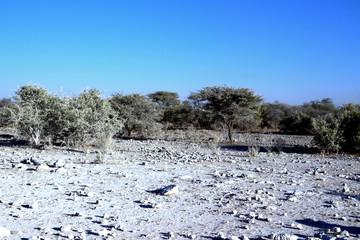 Landschaft Panorama Savannevon Namibia Afrika © zeralein