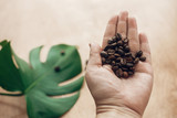 Roasted coffee beans in hand on background of wood with green leaves in light. Gathering coffee beans concept, morning hot drink with energy and aroma. Copy space. Green eco technology - 250035604