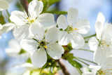 Beautiful blooming flowers on tree branch