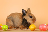 Brown rabbit with easter eggs on beige background