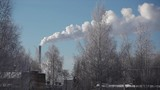 Smoking power plant with winter trees on the foreground - 250104455
