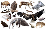 Set of fauna of North American animals. - 250109226