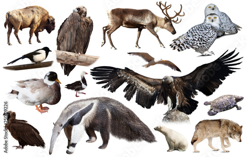 Set of fauna of North American animals. © JackF