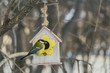 Quadro A small yellow tit sits on a yellow bird and squirrel feeder house from plywood in the park