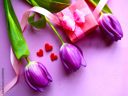 Purple tulips and gift box on pink background. Valentine's Day. Women's Day