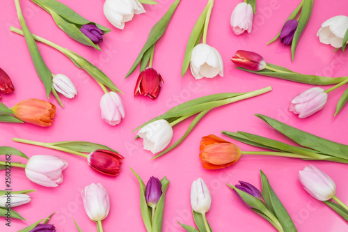 Spring tulips © images and videos
