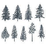 Pine and spruce trees. Vector sketch illustration. Forest and nature hand drawn design elements set