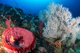 Beautiful Sponges and colorful soft corals on a tropical coral reef (Koh Bon, Thailand)
