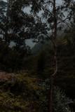 Fototapeta Na ścianę - Montañas - Paisaje - Green - Pasto - plantas © LuisEduardo
