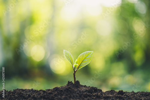 Growth Trees concept in the nature morning light and background Beautiful green © artrachen