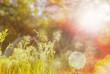 Leinwanddruck Bild - Sunny meadow
