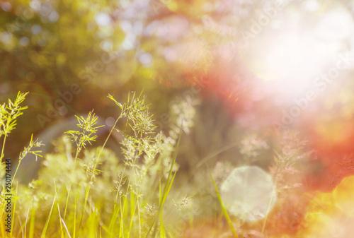 Leinwanddruck Bild Sunny meadow