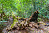 Fallen tree covered with moss in a beautiful lush wild rainforest