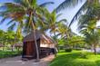 Quadro Tropical coconut palm trees at the beach