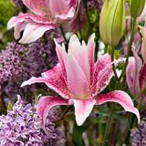 Lilien, Flieder, Blumenstrauß
