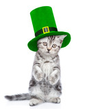 St Patrick's Day concept. Funny kitten in the hat of the leprechaun. isolated on white background