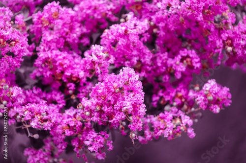 Beautiful pink flowers on a tree in the park