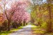 Quadro springtime