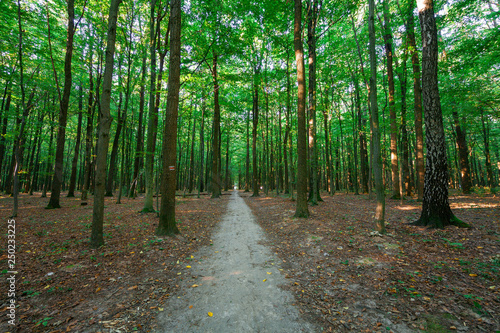 beautiful green forest in summer