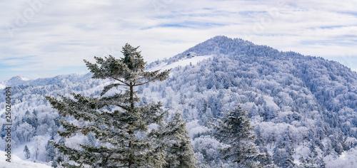 風景物語(志賀高原の冬) © camera papa