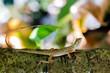 garden lizard close up on the tree