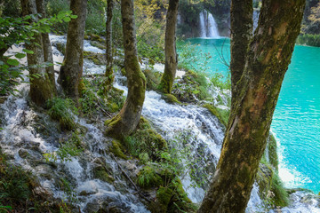 Scenic view through trees at waterfall in Plitvice National Park
