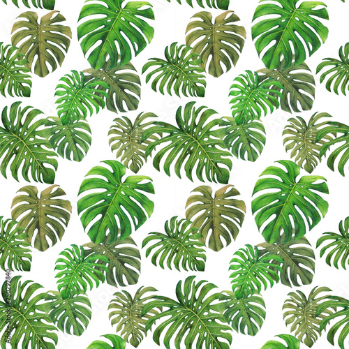 Monstera leaf seamless pattern,colored pencil drawing techniques,illustration © oratai