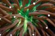 Up close shot of anemone