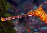 Colorful seadragon head