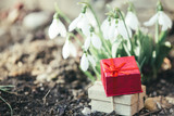 Snowdrops and present box spring concept background