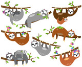 Vector Collection of Cute Sloths in Different Positions and with Babies