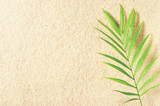 A branch of palm trees on the sand background. Sand texture Place for text. Palm leaves. Sand beach.