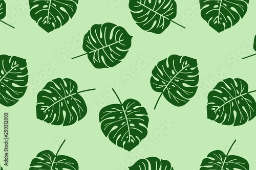Background of monstera leaves © Anna