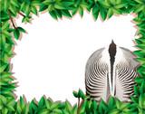 Leaf frame with zebra