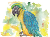 Colorful parrot on a branch. pastel