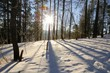 Long shadows of trees on the snow in the winter forest in Stolby Nature Sanctuary in Krasnoyarsk, Siberia, Russia