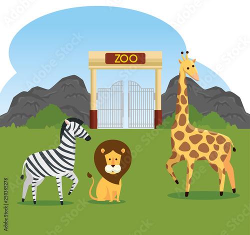 zebra with lion and giraffe wild animals reserve - 250365276