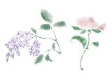 Digital illustration of flowers, isolated.