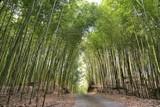 Fototapeta Bambus - bamboo forest © chienmuhou