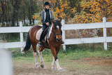 Fototapeta Konie - teenage girl riding horse outdoor © cherryandbees
