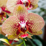 beautiful close-up of a wonderful orchid
