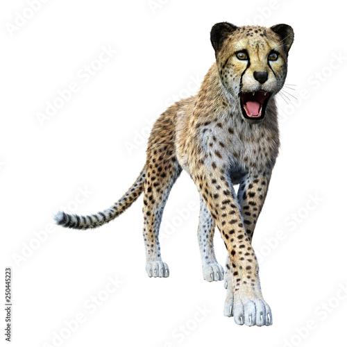 3D Rendering Big Cat Cheetah on White